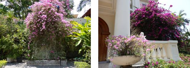 南国のお花とヨーロッパのお庭が融合した緑のガーデン